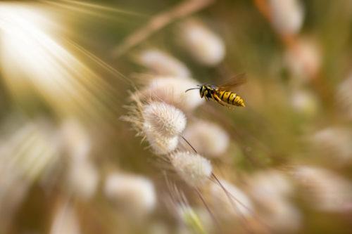 Våren – en super kilde til utforskning, refleksjon og filosofi