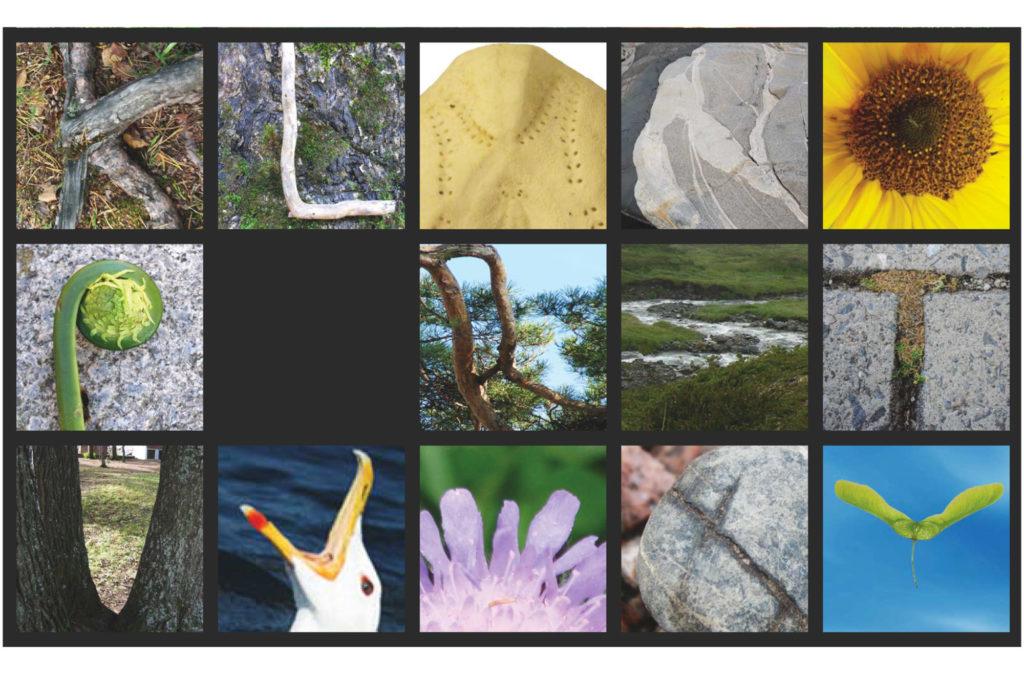 Utsnitt av plakat fra Naturfagsenteret om jagt på bokstaver og tall i naturen