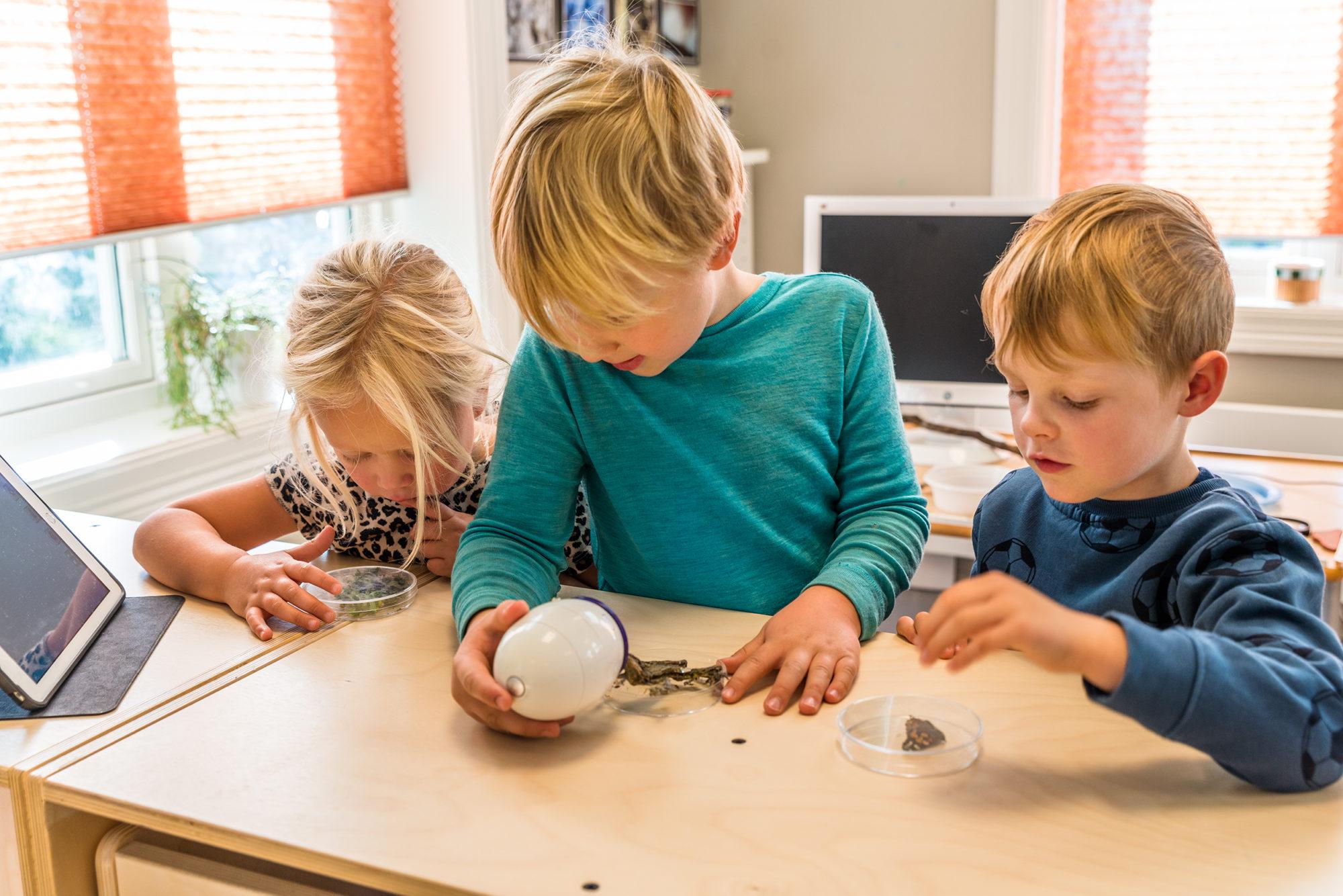 Barn som undersøker med digitalt mikroskop