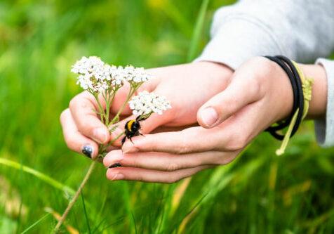Barnehender, humle og blomst